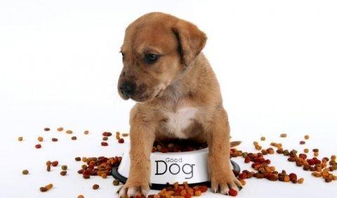 Výsledek obrázku pro potrava psa